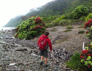 Hiking on Kapiti Island, off the Waikanae coast