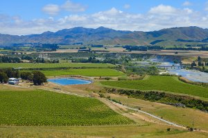 Vineyards in Marlborough, NZ